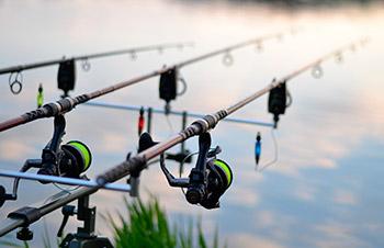 Karpestænger - fiskestænger til karpefiskeri